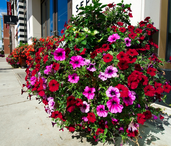 decorative planters can brighten up a dull storefront