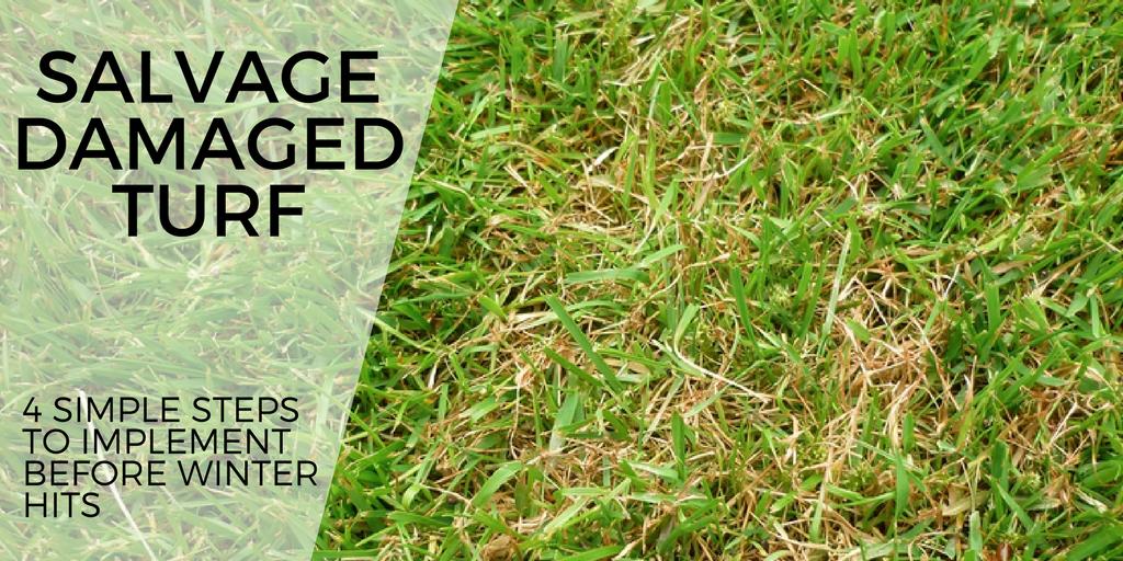 salvage damaged turf