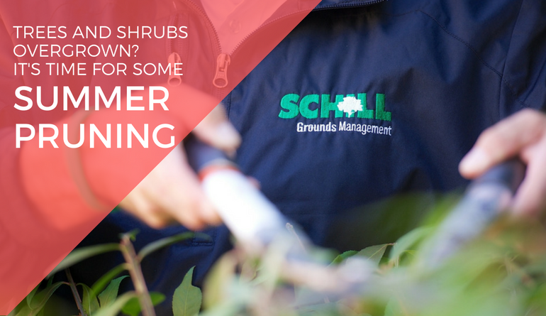 Trees and shrubs overgrown? It's time for some summer pruning