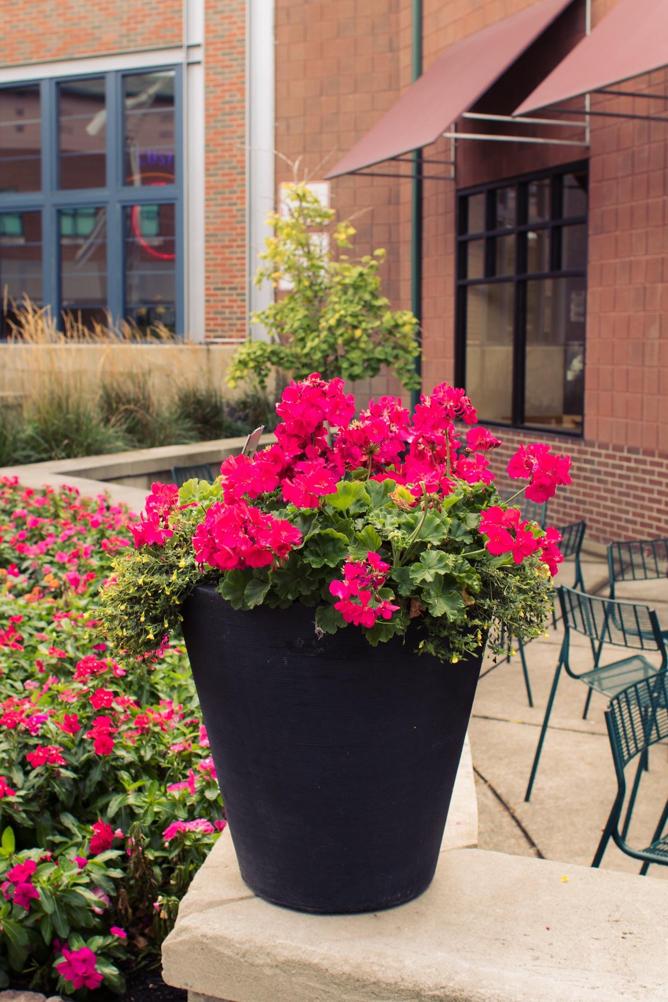 Magenta Flower Arrangement