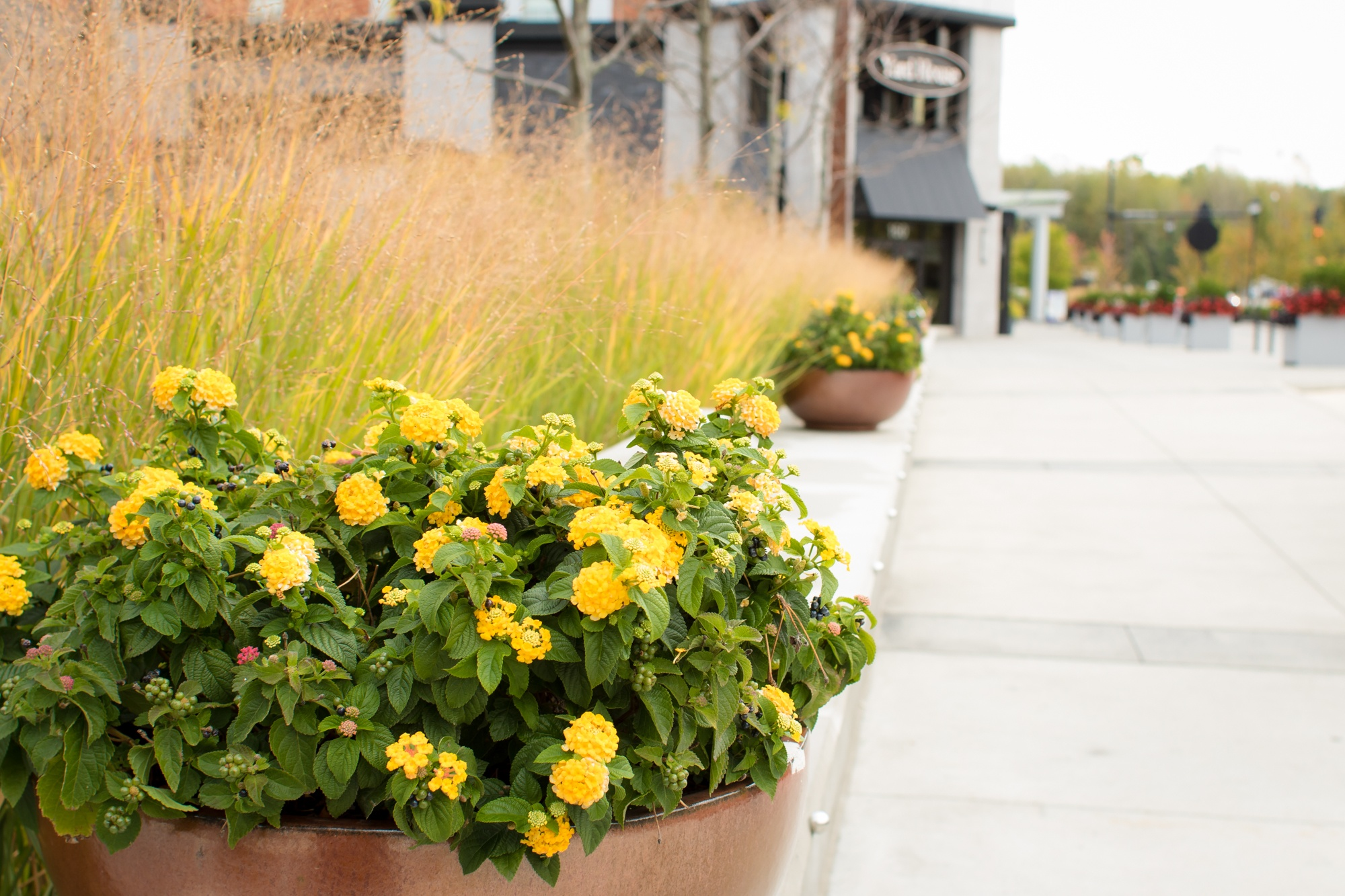 Flower arrangement at Crocker Park