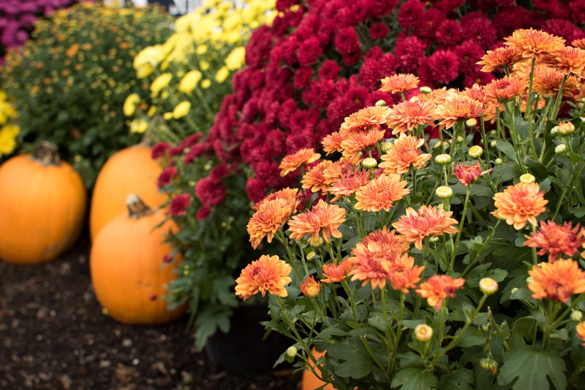 Fall Flower Arrangements