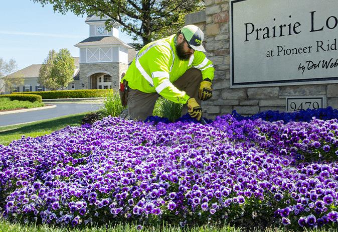 Man-treating-flowers