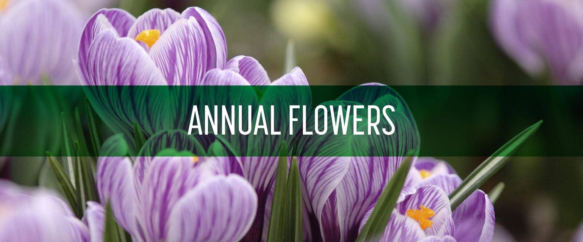 annual_flowers_schill_02-min