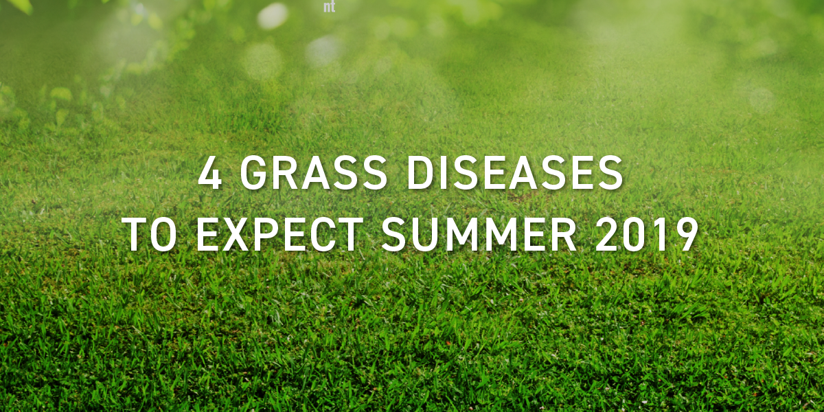 grass_diseases_schill_landscaping